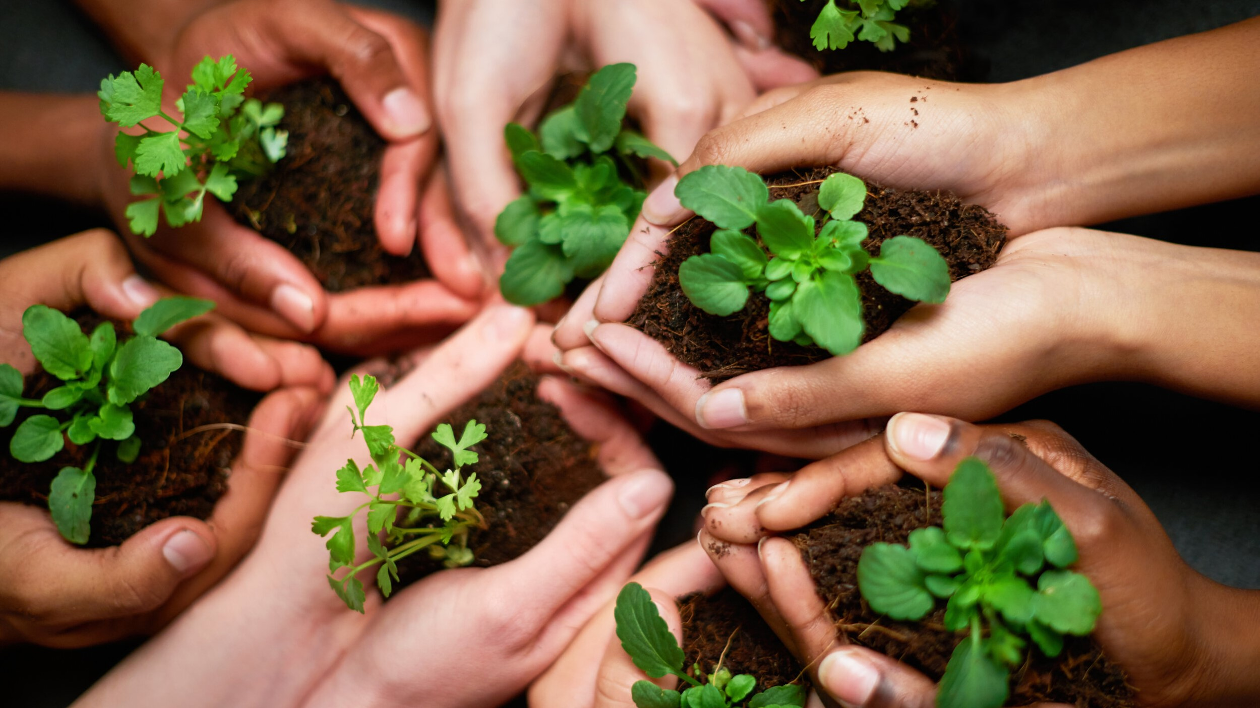 Photo of hands holding seedlings